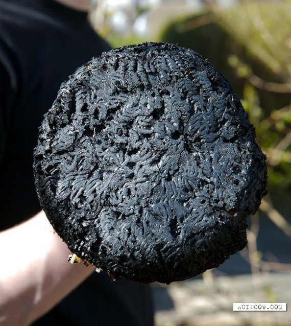 Burned and spoiled courses (20 pics)