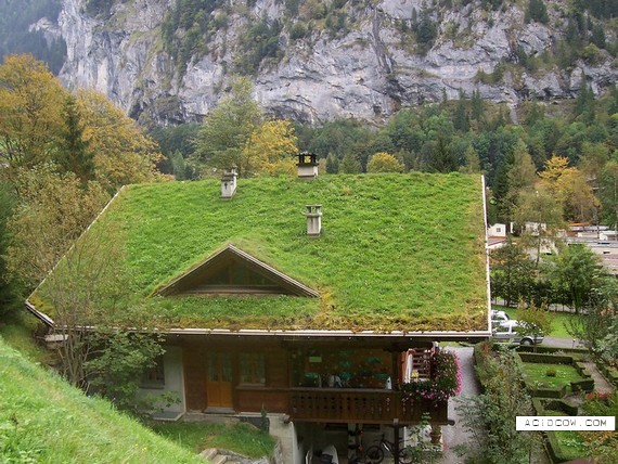 Houses that have grass on the roof (25 pics)