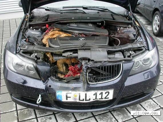 Fox vs BMW (5 pics)