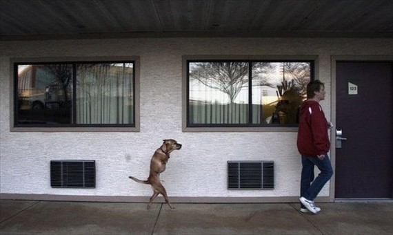 Faith, a bipedal female dog... (10 pics)