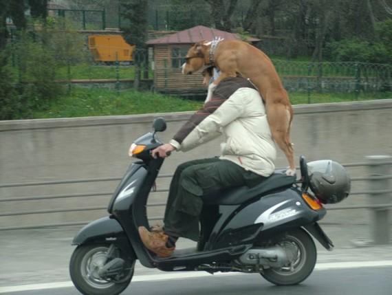 Amazing transportation... (3 pics)