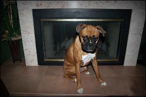 Clever dog (13 pics)