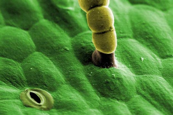 Insects Under a Microscope (32 pics)