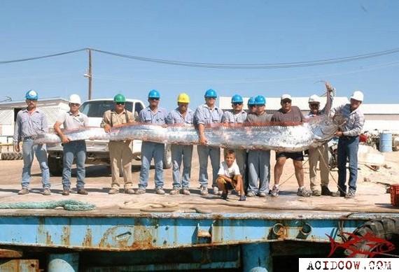 Trophy of real fishermen (7 pics)