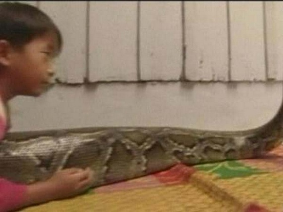 Best friend - a huge python (12 pics)