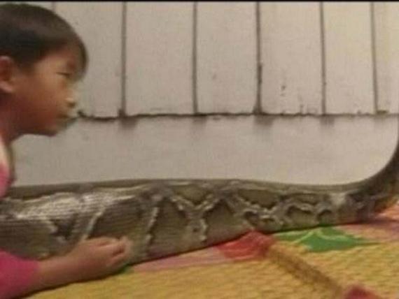 Best friend -  a huge python (12 pics)