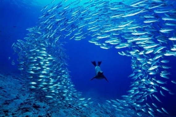Underwater... (105 pics)