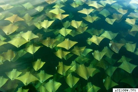 Ray Migration (5 pics)