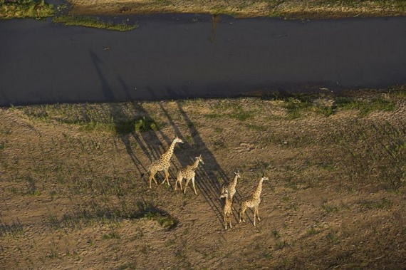 Beautiful Africa (50 pics)