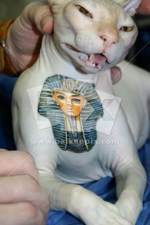 Tattooed Cat (15 pics)