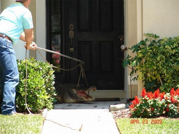 Surprise at home (14 pics)