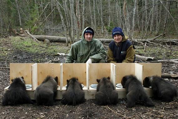 Rescuing Orphan Bear Cubs (12 pics)