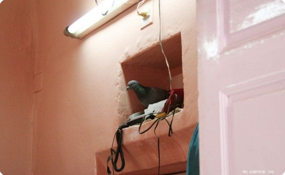 Rats Rule at Indian Temple (23 pics)