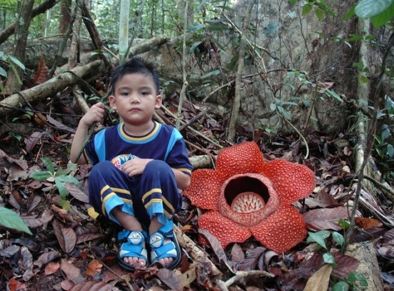 rafflesia flower and carrion flies relationship poems