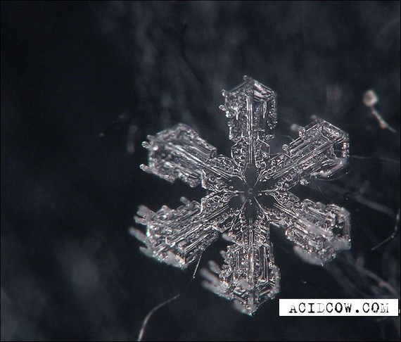 The snow-flakes is a miracle of nature (25 pics)