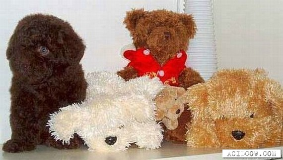 It's almost like teddy bear ))) (15 pics)