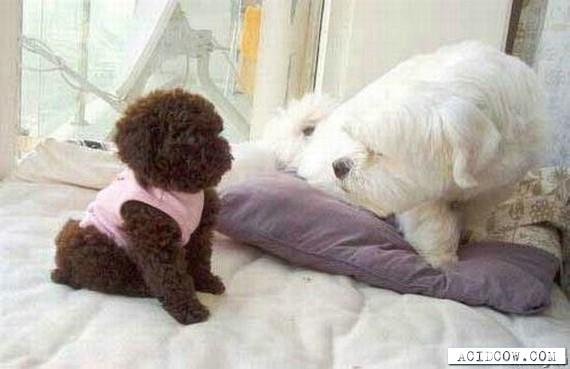It's almost like teddy bear ))) (15 pics)