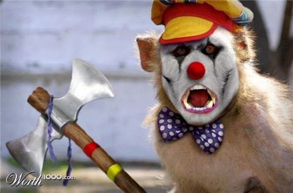 Animals in the role of clowns (43 pics)