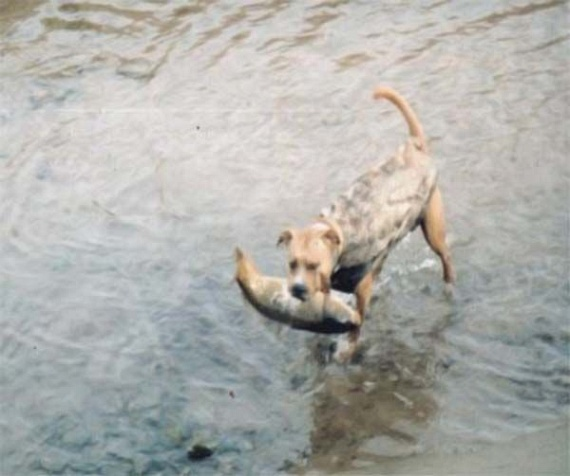 The fishing dog (9 pics)