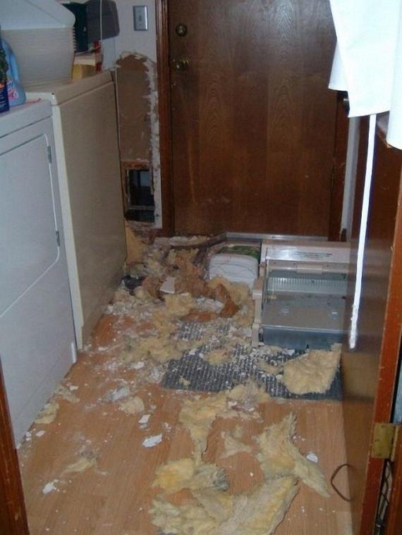 Poor Doggy (3 pics)