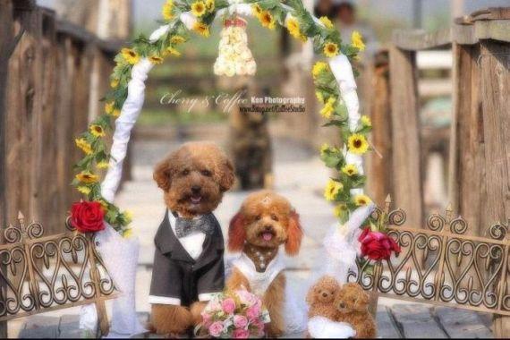 Funny Wedding (19 pics)