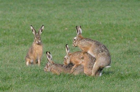 Wild group sex (29 pics)