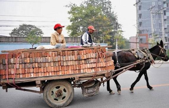 Funny Transportation (39 pics)