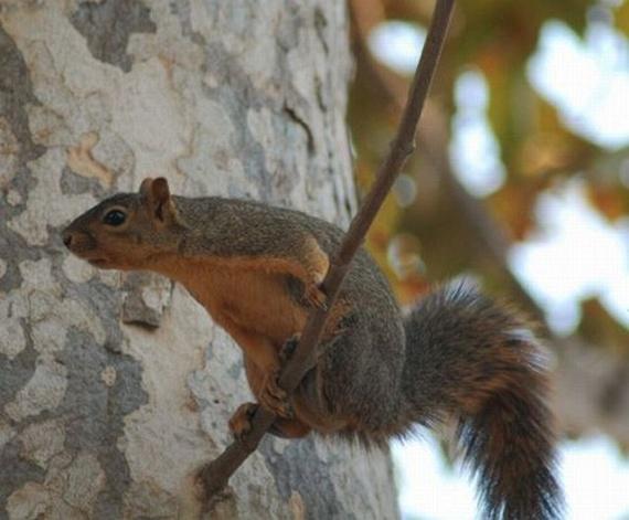 Squirrel Acrobatics (17 pics)