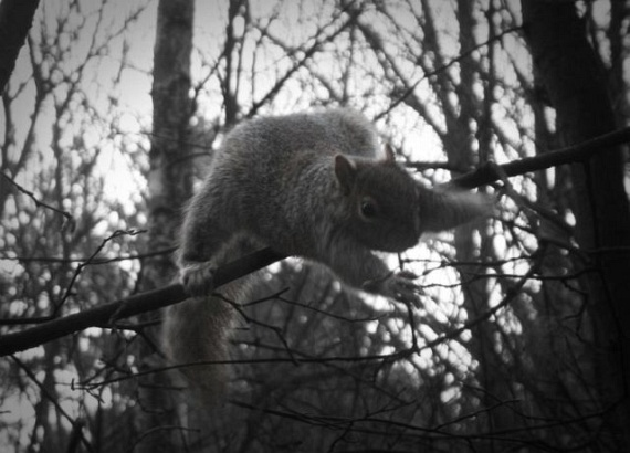 Squirrel Acrobatics (17 pics)