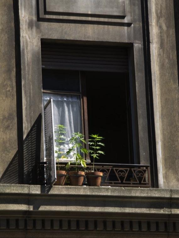 Windows of Amsterdam (9 pics)