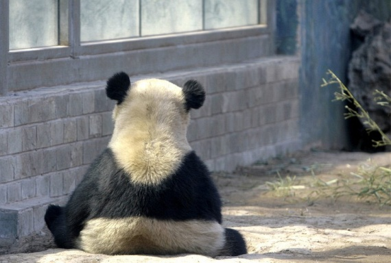 Funny Animals (37 pics)