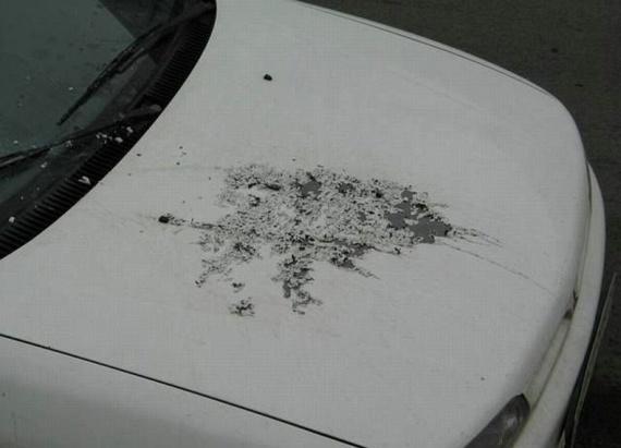 Revenge...  (55 pics)