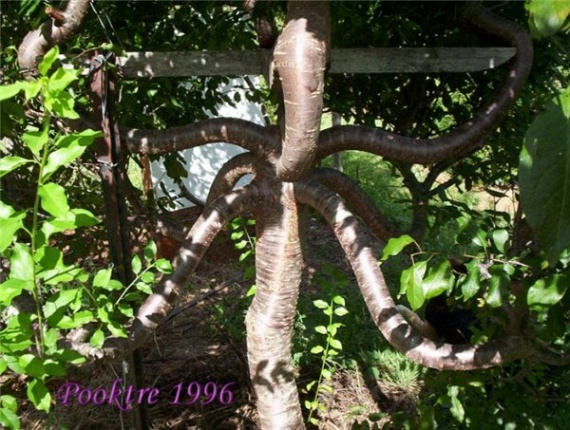 Pooktre Tree Shapers (21 pics)