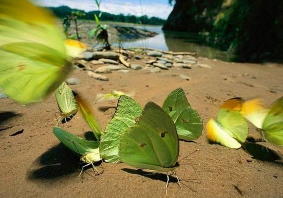 Beautiful Nature (60 pics)