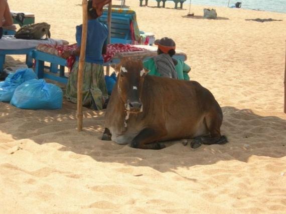 Paradise Beach ))))))) (34 pics)