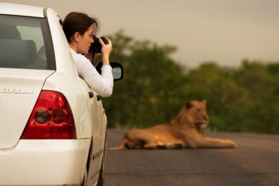 Kruger National Park (52 pics)