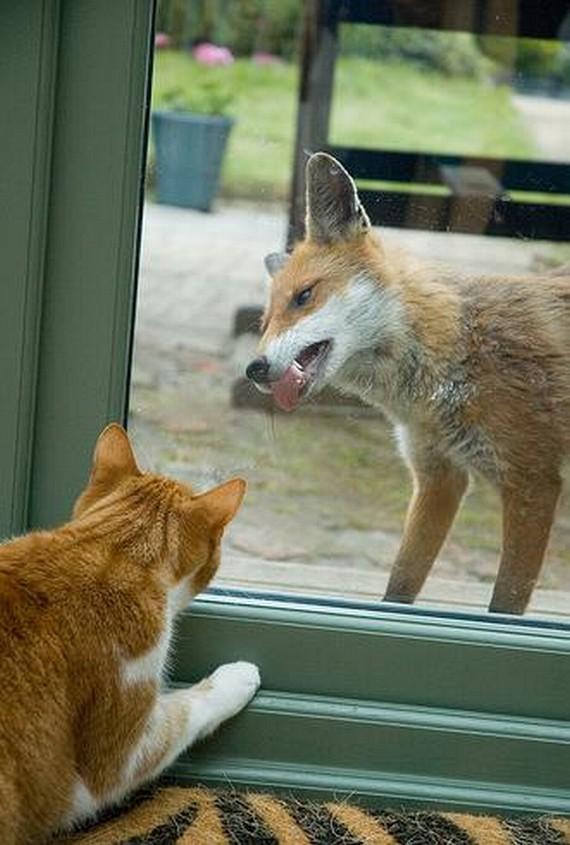 Animals through the glass (50 pics)