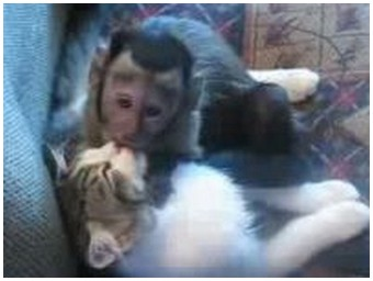 Monkey and cat make out (3.3 Mb)