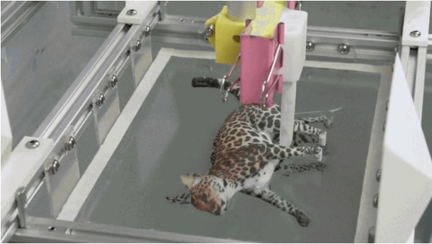Acid Gifdump, May 16, 2016 (25 gifs)