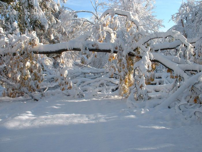 1Western MA October 2011 Snow Storm Damage (28 pics)