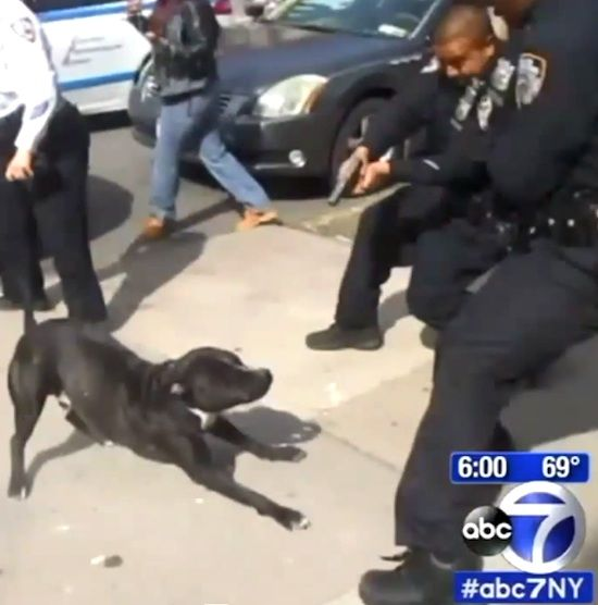 Cop Shoots At Dog. Was He Right? (pics + video)