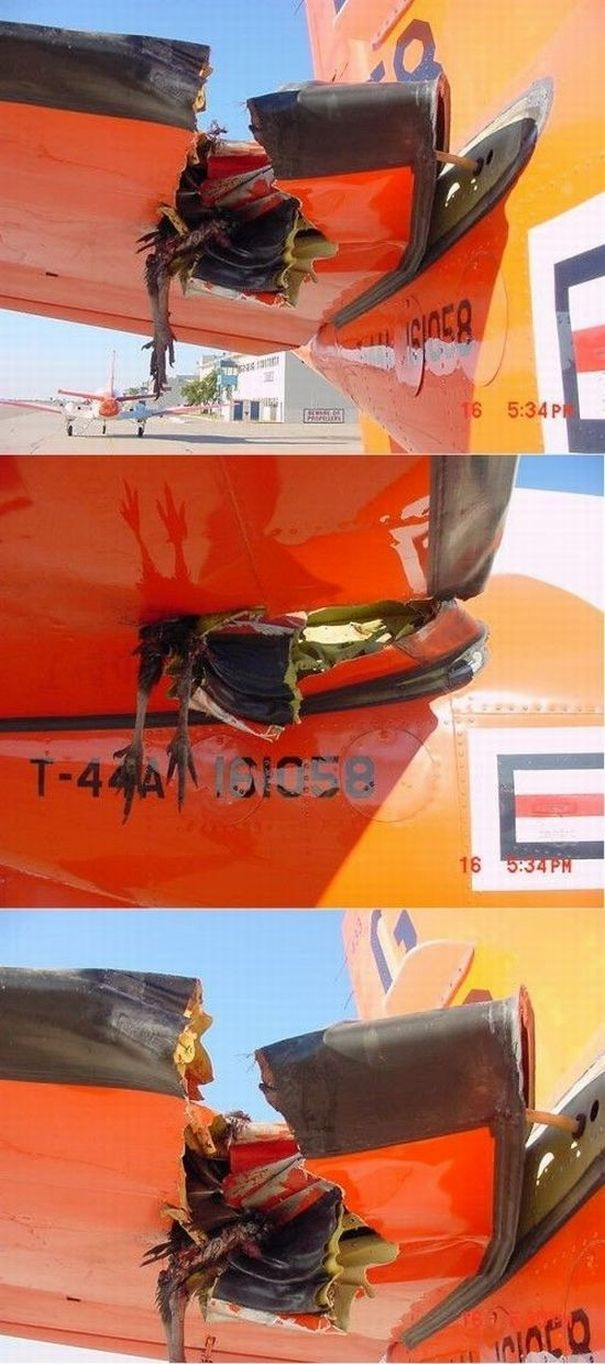 Birds vs Planes (25 pics)
