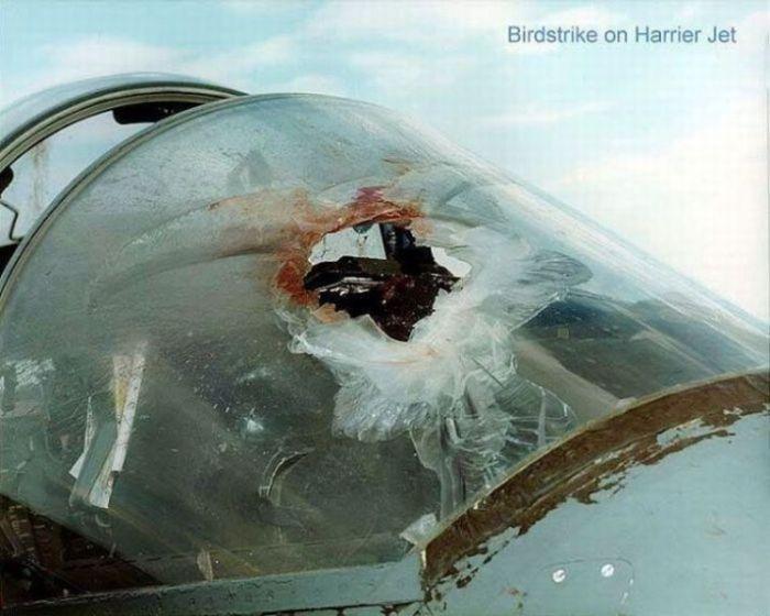 Birds vs Planes (25 pics)