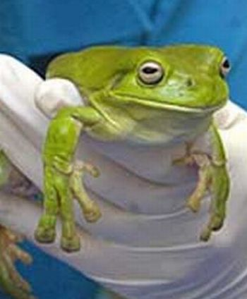 A frog that ate some plastic wrap (3 pics)