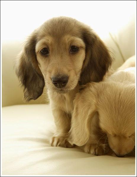 Cute Puppies (17 Pics