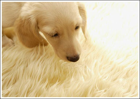 Cute puppies (17 pics)
