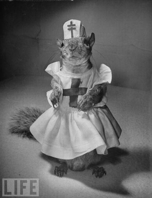 A Squirrel's Guide to Fashion (14 pics)