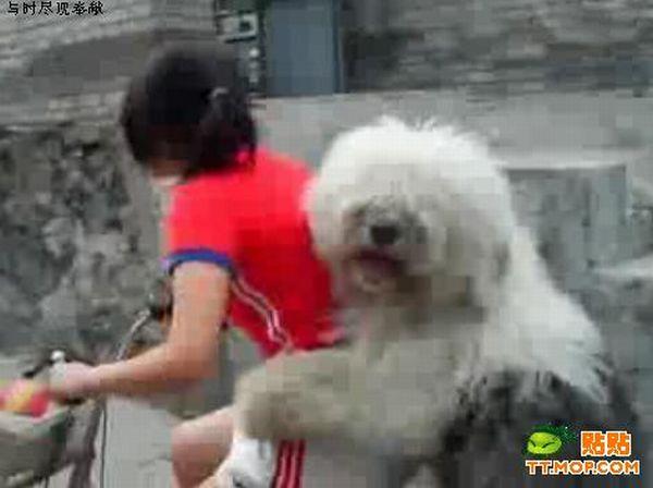 Dog Rider (5 pics)