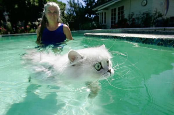 Swimming cats (14 pics)