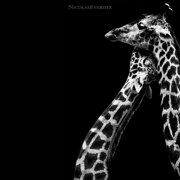 Animal Photos by Nicolas Evariste (25 pics)